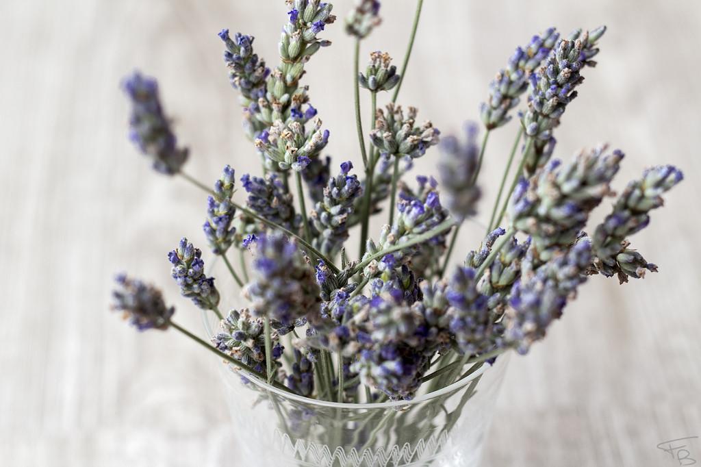 fiori freschi usati per realizzare lo sciroppo alla lavanda